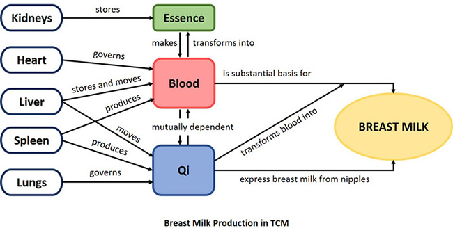 Breast production in TCM