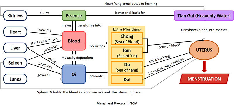 Women's physiology in TCM